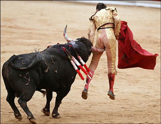 dec-bull
