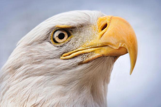 eagle-eye-amanda-horst